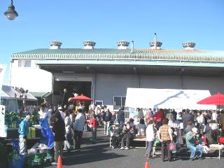 ピュアグリーン祭り2009告知