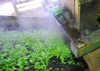 工場からできたての荒茶詰め放題