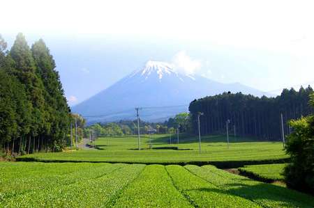 富士山が正式に世界文化遺産